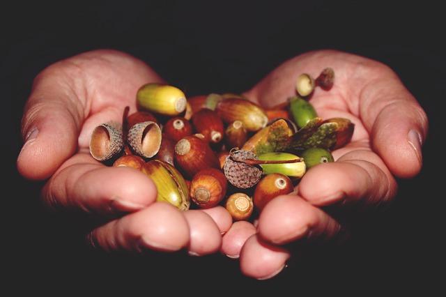 The Environmental Volunteers – Part Two